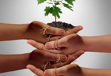 36763432 - community cooperation concept and social crowdfunding investment symbol as a group of diverse hands nurturing a sapling tree with roots wrapped and connecting the people together.